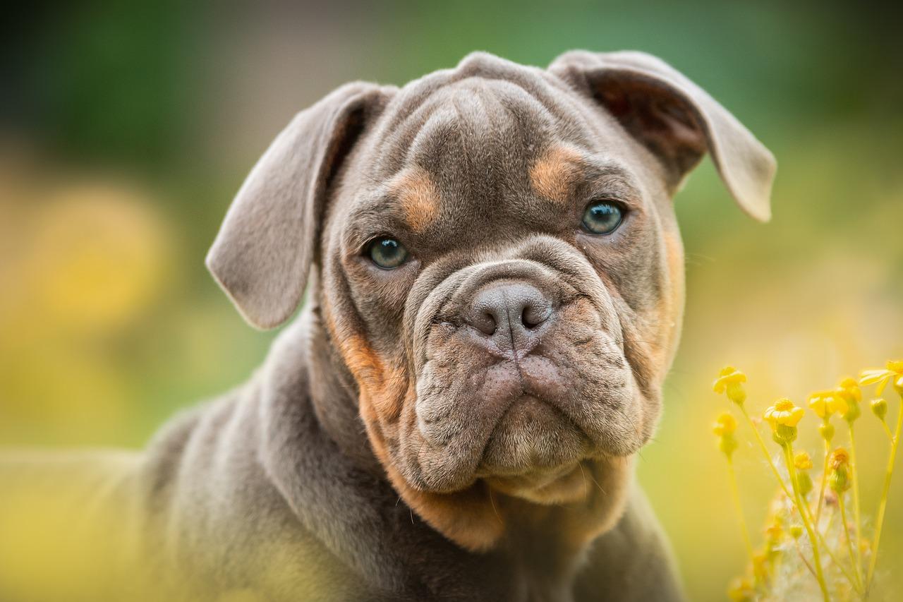Прага вошла в топ-5 лучших городов мира для собак